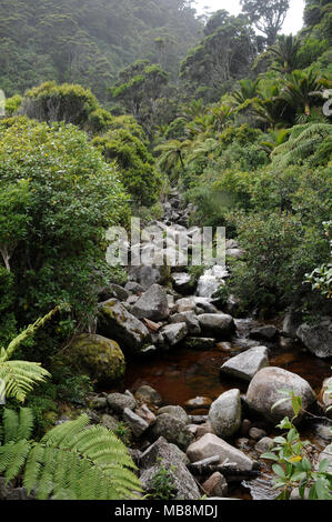 Native bush in the Oparara Basin region on the West Coast of New Zealands South Island - Stock Photo