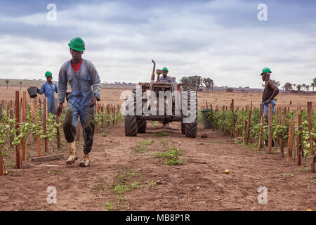 CABINDA/ANGOLA - 09JUN2010 - Team of African farmers walking between planting with tractor. - Stock Photo