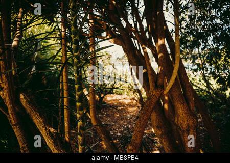 View through the trees, Royal Botanic Gardens, Sydney, Australia - Stock Photo