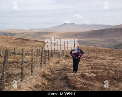Female hiker approaching Fan Gyhirych from Bwlch y Duwynt in Fforest Fawr, Brecon Beacons National Park. Pen y Fan and Corn Du rise in the background. - Stock Photo