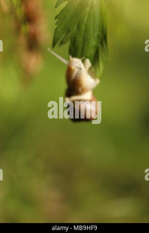Snail, detailed macro close up in the garden - Stock Photo