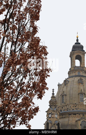 The Frauenkirche church, called the church of our lady, landmark in the German city Dresden in front of a white background, in front a deciduous tree - Stock Photo