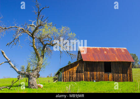 Old Weathered Wooden Barn With Rusty Tin Roof Near Sparse Oak Tree - Stock Photo