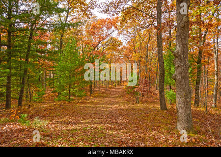 Fall Colors in a MIxed Forest in Black River State Forest in Wisconsin - Stock Photo