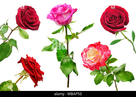 Set of beautiful red roses isolated on white background. Beauty in nature from different angles. - Stock Photo