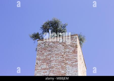 Bell tower with a garden on the roof (Spello, Umbria, Italy) - Stock Photo