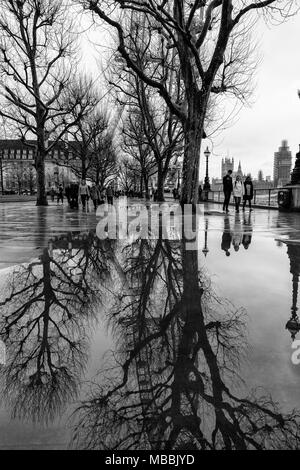 Black and white, monochrome, imageThe London Eye and trees on the South bank of the River Thames in London, England, reflected in pools of rain water. - Stock Photo