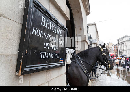 A horse from the Queens Life Guard on Whitehall, London. A sign warning tourists 'Beware horses may kick or bite! Thank you'. - Stock Photo