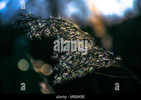 Breaking the light.Long grass on meadow against strong sunlight and dark ,natural background.Moody and atmospheric nature photograph.Light and shadow. - Stock Photo