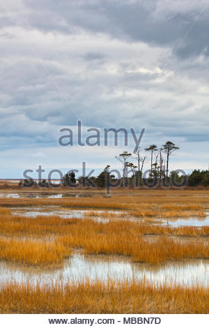 Storm clouds advance over the marsh of the Eastern Shore of Virginia National Wildlife Refuge in Virginia. The refuge is at the southern tip of the De - Stock Photo