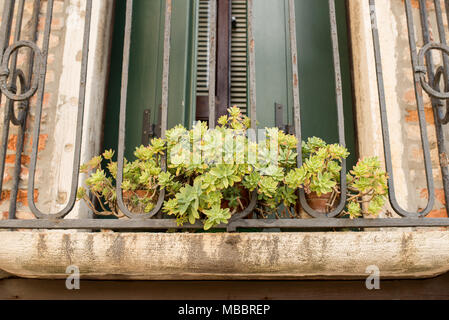 Green plant in red flower pot outside on a windowsill against a red brick wall background. - Stock Photo