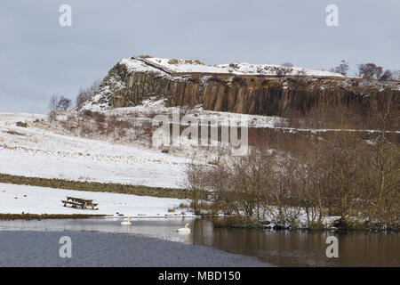 Hadrian's Wall in winter - a pair of Mute Swans on Walltown Quarry pool, with Walltown Crags in the distance - Stock Photo