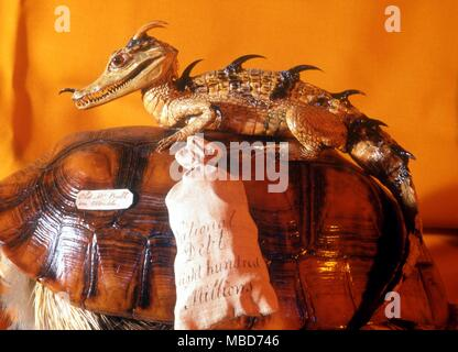 Dragon, as a composite of other creatures, mainly lizards.  Detail from a taxidermy creation by Charles Waterton (1782-1865) - a political satire on the National Debt, at 800 million pounds.  Wakefield City Museum - Stock Photo
