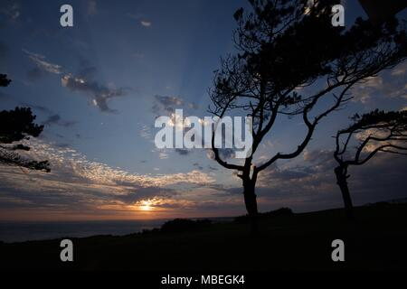 Scots Pine trees and sunset over the Solent on the Isle of Wight - Stock Photo