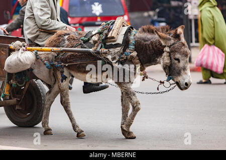 Donkey pulling goods in the Streets Markets in Marrakech - Stock Photo