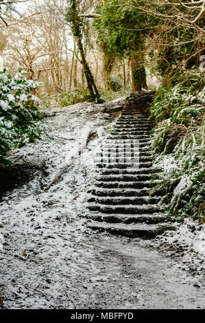 Steps in a forest covered with snow - Stock Photo