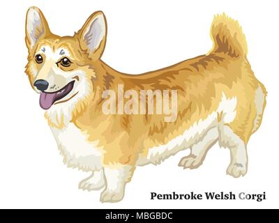 Colorful decorative portrait of standing in profile Pembroke Welsh Corgi, vector isolated illustration on white background - Stock Photo