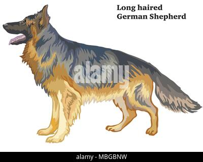 Colorful decorative portrait of standing in profile longhaired German Shepherd , vector isolated illustration on white background - Stock Photo