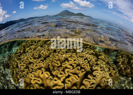 A beautiful coral reef grows near a remote Indonesian island in the Banda Sea. This region is in the Coral Triangle and has high marine biodiversity. - Stock Photo