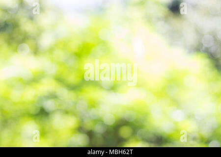 Blur bokeh background, Natural blurred background In public park - Stock Photo