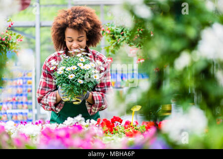 Florist smiling while holding a beautiful potted daisy flower plant - Stock Photo