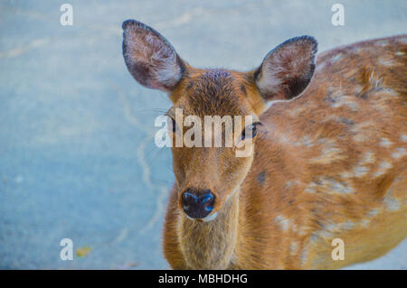 Deer Looking At You - Stock Photo