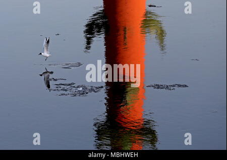 St Petersburg, Russia. 11th Apr, 2018. ST PETERSBURG, RUSSIA - APRIL 11, 2018: A seagull flying over a Rostral Column on the Spit of Vasilyevsky Island reflected in the Neva River. Alexander Demianchuk/TASS Credit: ITAR-TASS News Agency/Alamy Live News - Stock Photo