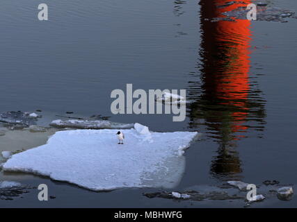 St Petersburg, Russia. 11th Apr, 2018. ST PETERSBURG, RUSSIA - APRIL 11, 2018: A Rostral Column on the Spit of Vasilyevsky Island reflected in the Neva River during an ice drift. Alexander Demianchuk/TASS Credit: ITAR-TASS News Agency/Alamy Live News - Stock Photo