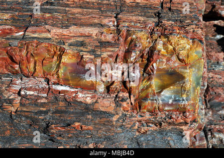 Closeup of a colourful piece of petrified wood in Arizona. Organic matter in the log was gradually replaced by minerals millions of years ago. - Stock Photo