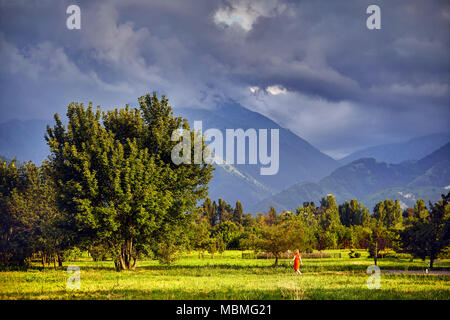 Woman in red dress walking to big tree in the park with cloudy mountains in Almaty, Kazakhstan - Stock Photo