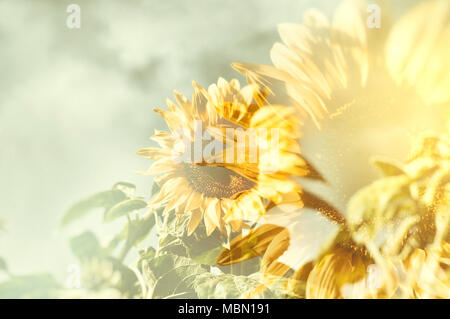 Abstract sunflower with blurred golden sunburst as background.