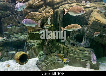 Various fish species at 'Cretaquarium' in Heraklion city, Crete Island, Greece - Stock Photo