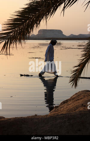 Arabic Man walking on the trunk of a fallen palm tree at the Siwa Oasis in Egypt - Stock Photo