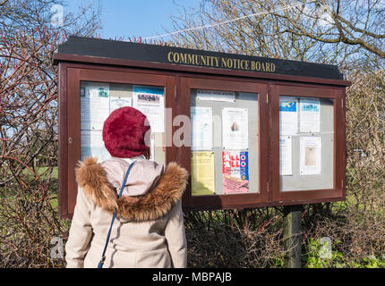 Woman reading a Community Notice Board in Ferring, West Sussex, England, UK. Lady looking at a Community Noticeboard in a British town. - Stock Photo