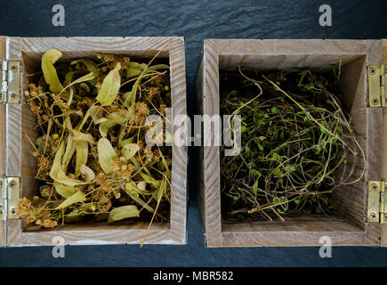 Old boxes with dry herbs on blue stone background surface - Stock Photo