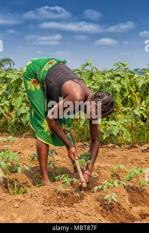 CABINDA/ANGOLA - 09 JUN 2010 - Rural farmer to till land in Cabinda. Angola, Africa. - Stock Photo