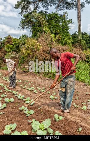 CABINDA/ANGOLA - 09 JUN 2010 - Rural farmers to till land in Cabinda. Angola, Africa. - Stock Photo