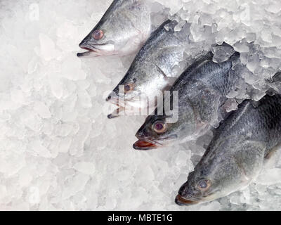 white snapper fish, raw fresh white snapper frozen in supermarket (selective focus) - Stock Photo