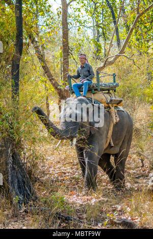 Mahout on an Asian, or Indian Elephant, Bandhavgarh National Park, Tala, Madhya Pradesh, India - Stock Photo