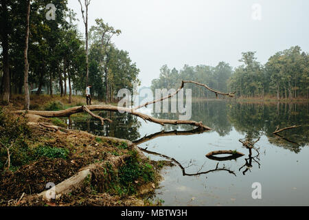 Man standing on the broken tree over lake in foggy forest. Nepal, Chitwan - Stock Photo