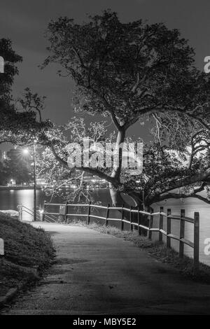 Night-time view of a tree-lined walkway at Mrs Macquarie's Point on the foreshores of Sydney Harbour, Australia. - Stock Photo