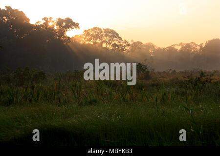 Dawn in the Amazon Rainforest, Tambopata National Reserve, Puerto Maldonado, Peru - Stock Photo