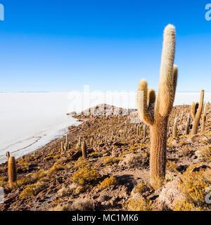 View of cactus covering Island Incahuasi with the Uyuni Salt Flats in Bolivia - Stock Photo