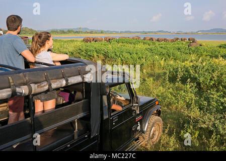 Horizontal view of tourists on safari watching wild elephants at Minneriya National Park in Sri Lanka. - Stock Photo
