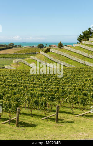 Terraced vineyards at the Esk Valley vineyard, Hawkes Bay, New Zealand, new world wine production - Stock Photo