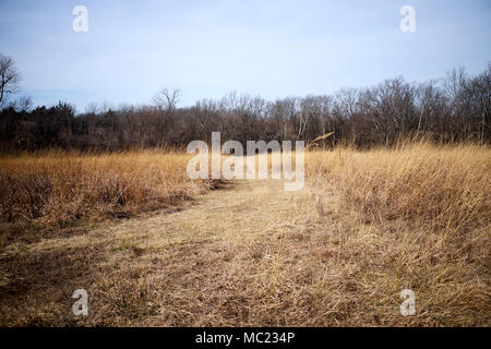 Winding country dirt road through dry grassland with leafless winter trees in a rural landscape - Stock Photo