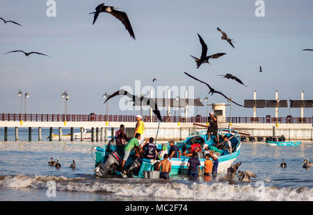 A morning fishing market in the town of Puerto Lopez, Ecuador. Fisherman carry buckets of fish ashore as black crows and birds try to grab fish. - Stock Photo