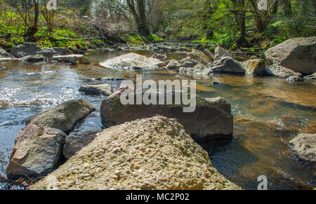 Stream with stones in the woods - Stock Photo