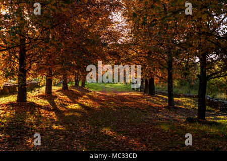 Access or path with orange trees on the sides - Stock Photo
