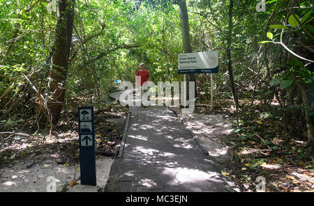 Tourist walking on the boardwalk through the rainforest at Green Island National Park, Great Barrier Reef, Far North Queensland, QLD, FNQ, GBR, Austra - Stock Photo